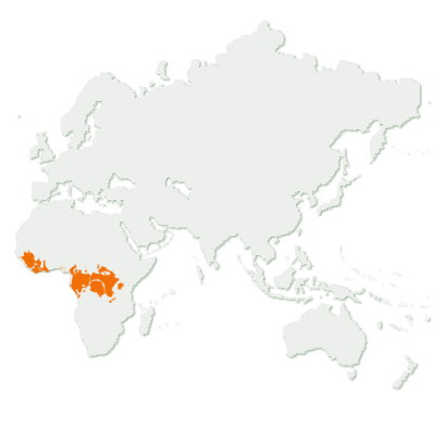Chimpanzee Distribution Map