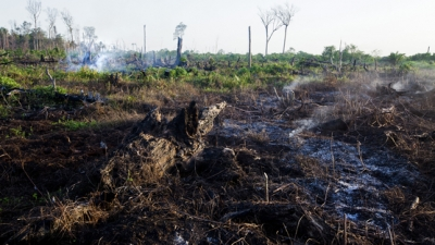 Coalition to Save Tripa Peat Swamp Forest