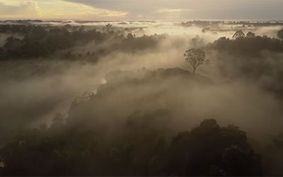 Last Stand for Leuser - Asia's Vanishing Eden