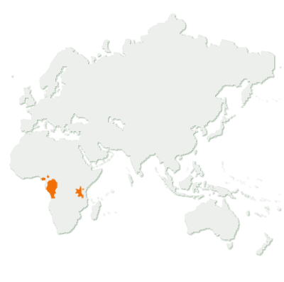 Gorilla Distribution Map
