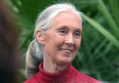 Exclusive chimpanzee safari and evening with Dr Jane Goodall, in Gombe, Tanzania