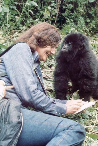 Remembering Poppy, last gorilla made famous by Dian Fossey
